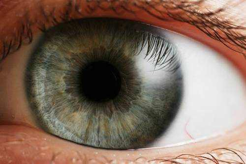 function of the iris in the human eye
