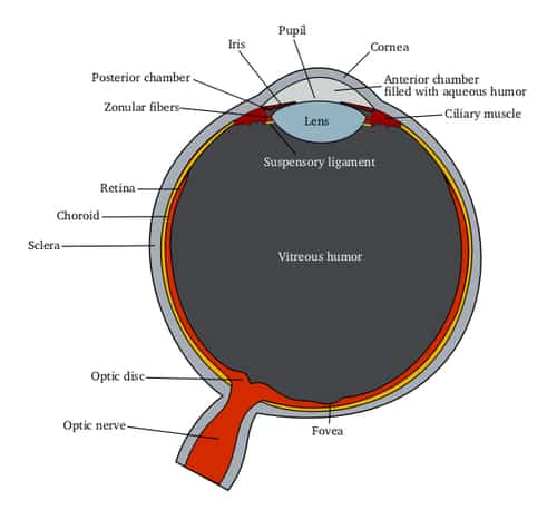 diagram of the eye